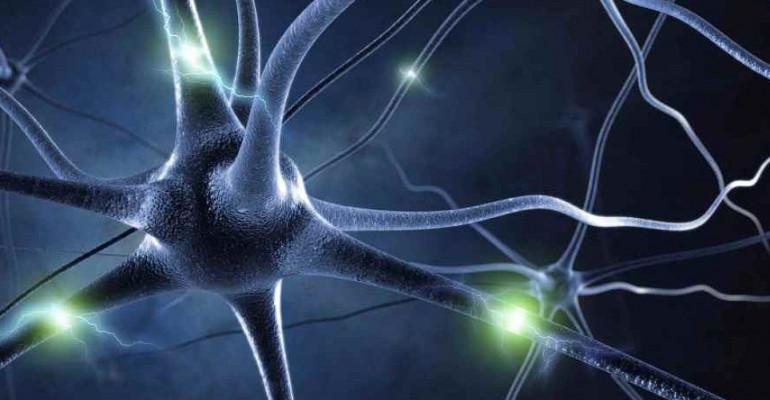 Efectos del estrés en la inmunología